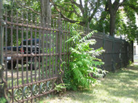 Fence - West Side - June 29, 2010